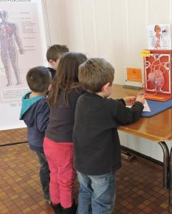 exposition corps humain atelier coeur